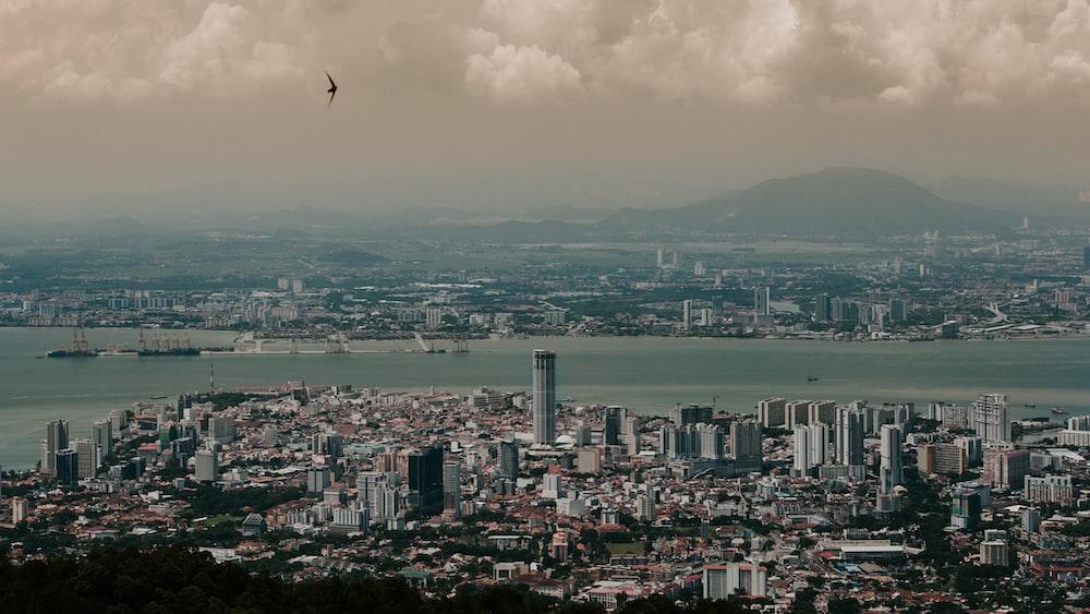 bird flying over city during daytime