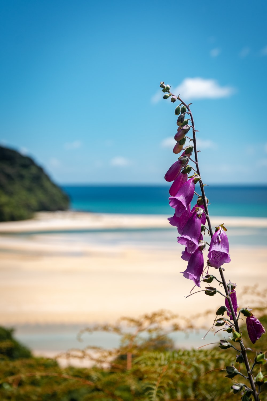 purple flower near body of water during daytime