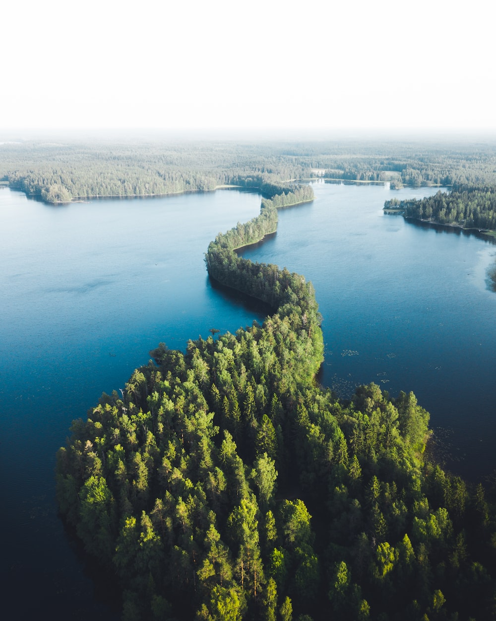 aerial view of green trees near blue sea during daytime