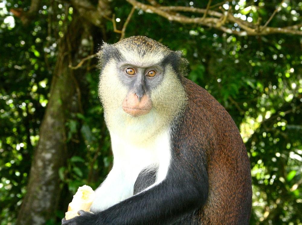 black and white monkey on tree during daytime