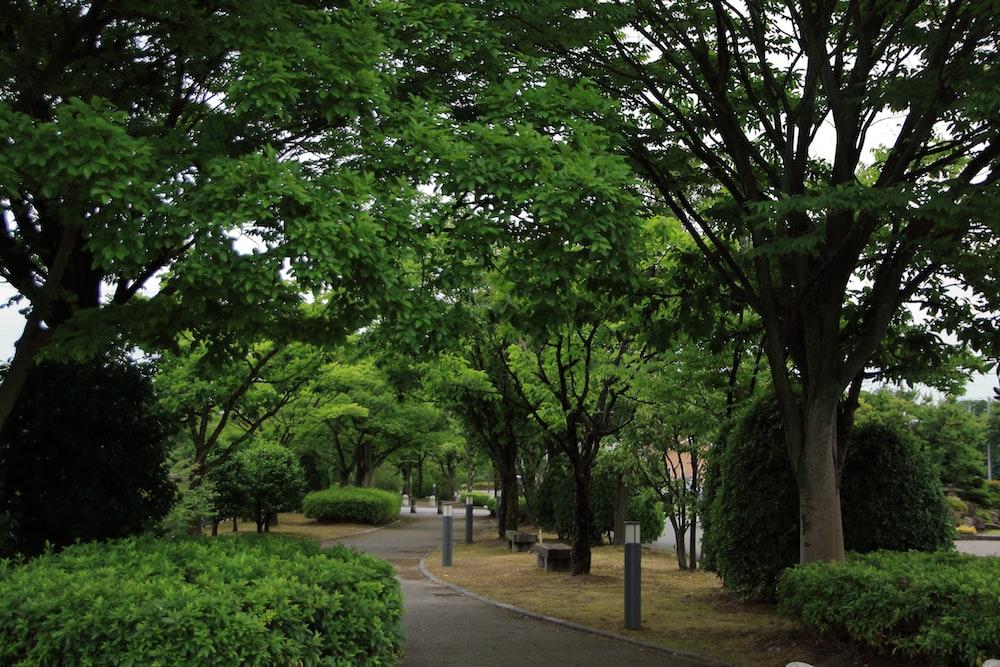 green trees on gray concrete pathway