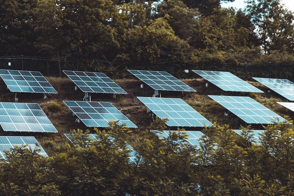 blue solar panels on green trees during daytime