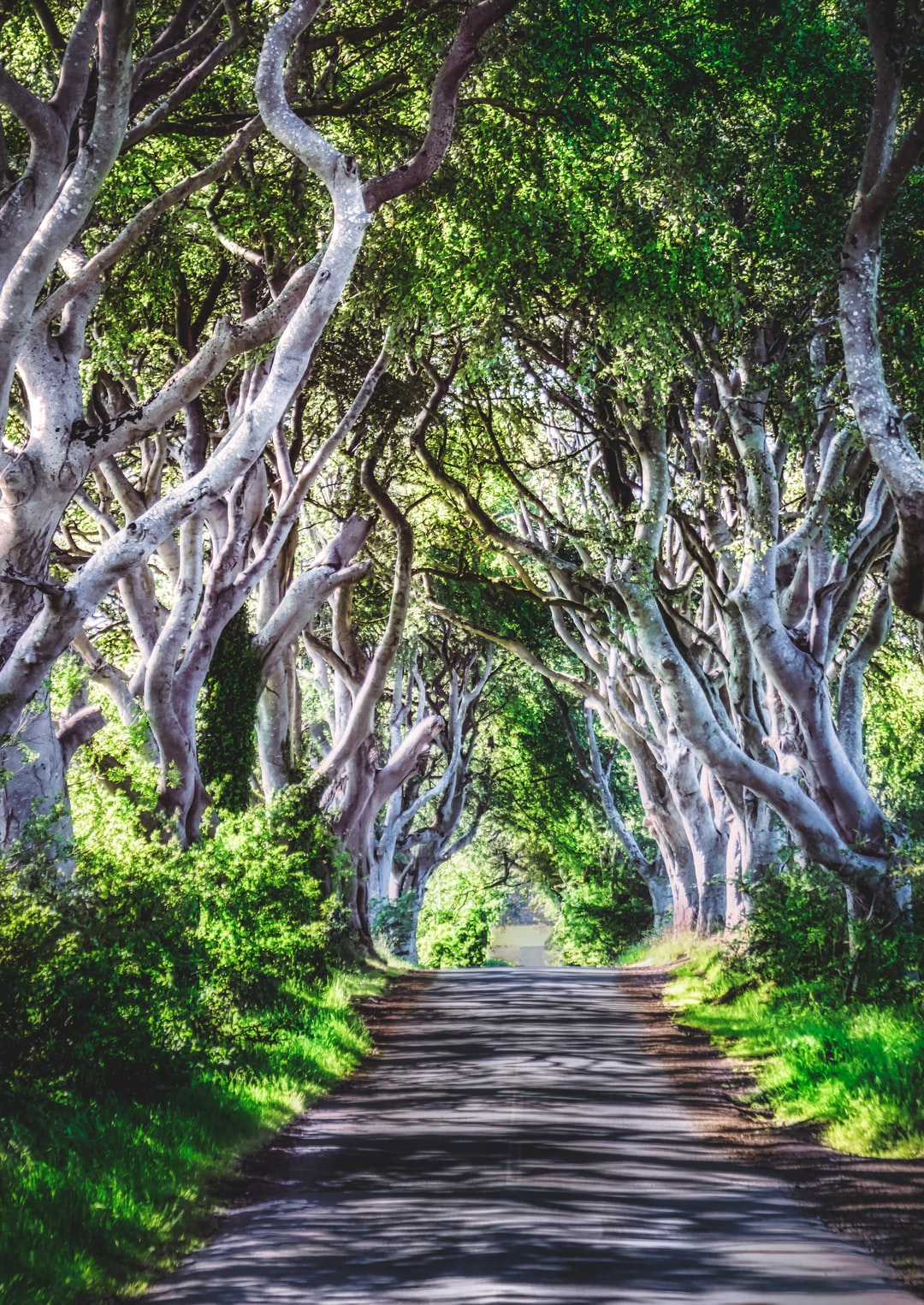 The Dark Hedges from Game of Thrones (Jun., 2020).