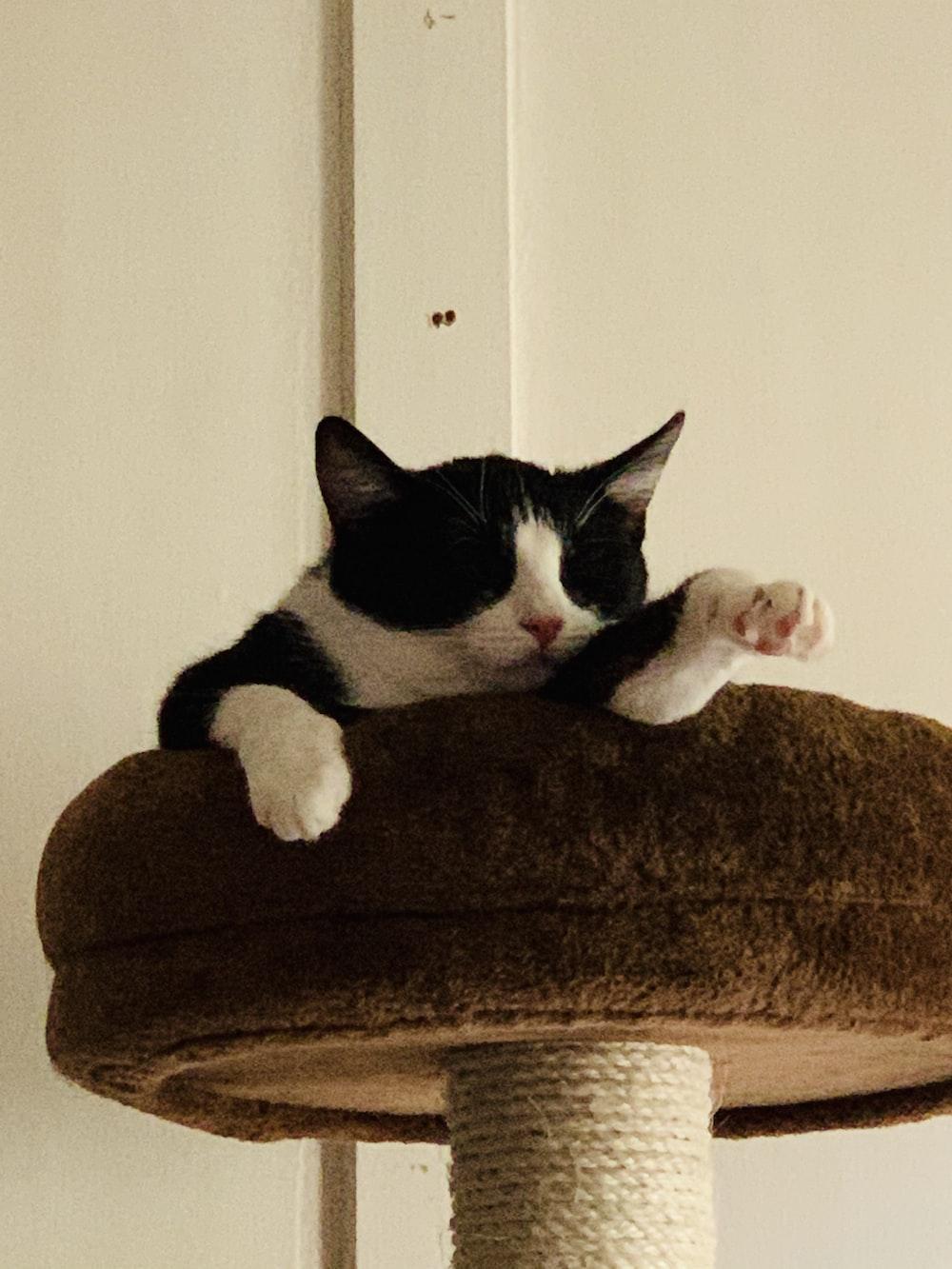 tuxedo cat lying on brown cushion