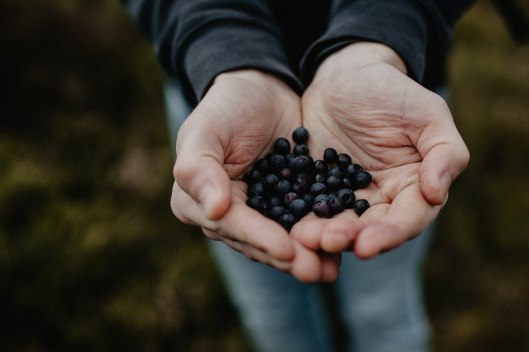 Hands holding a crop of blueberries