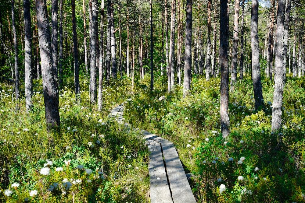 purple flowers on brown wooden pathway