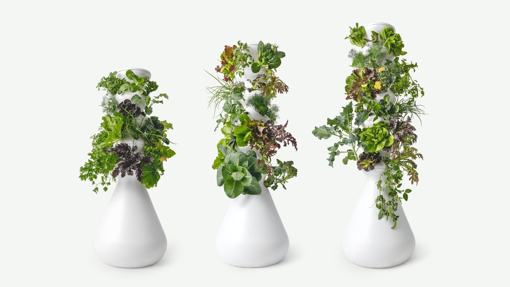 white and green flowers in white ceramic vase