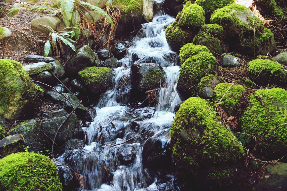 green moss on brown rock near water falls
