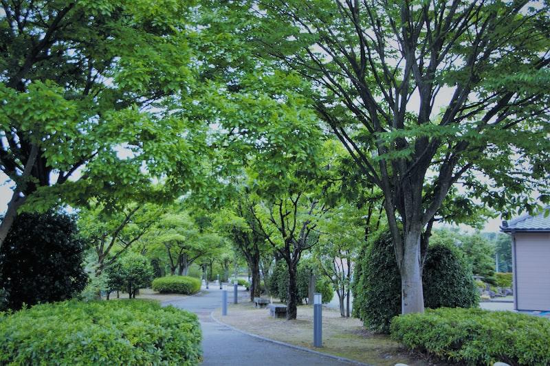 樹木 美感練習 裝潢布置