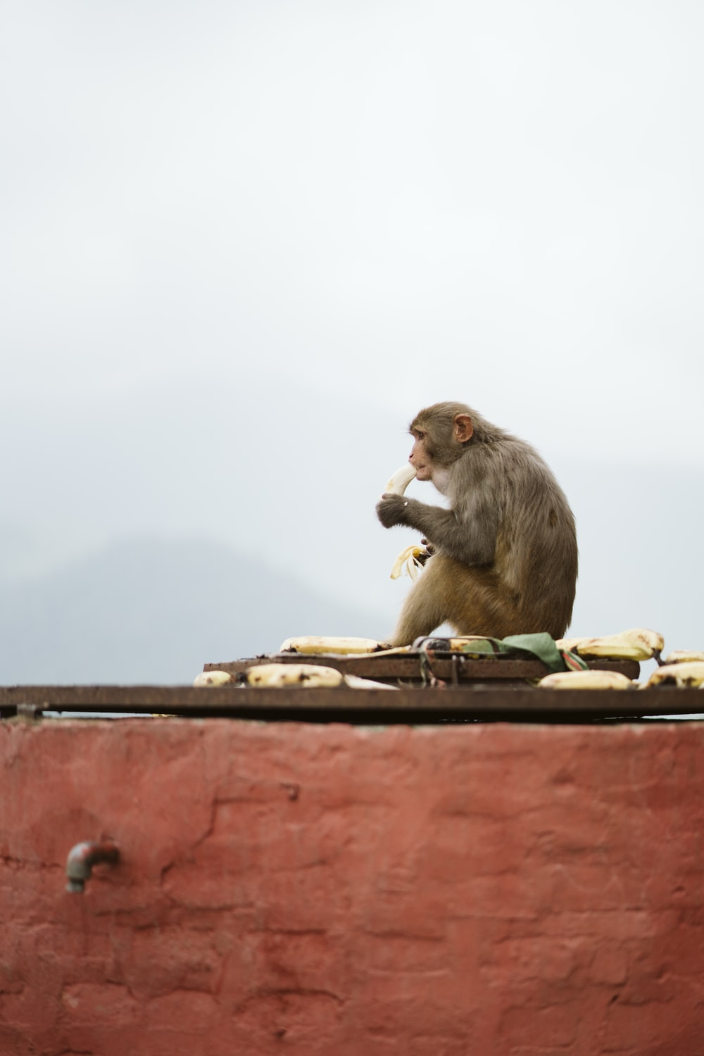brown monkey sitting on brown wooden table