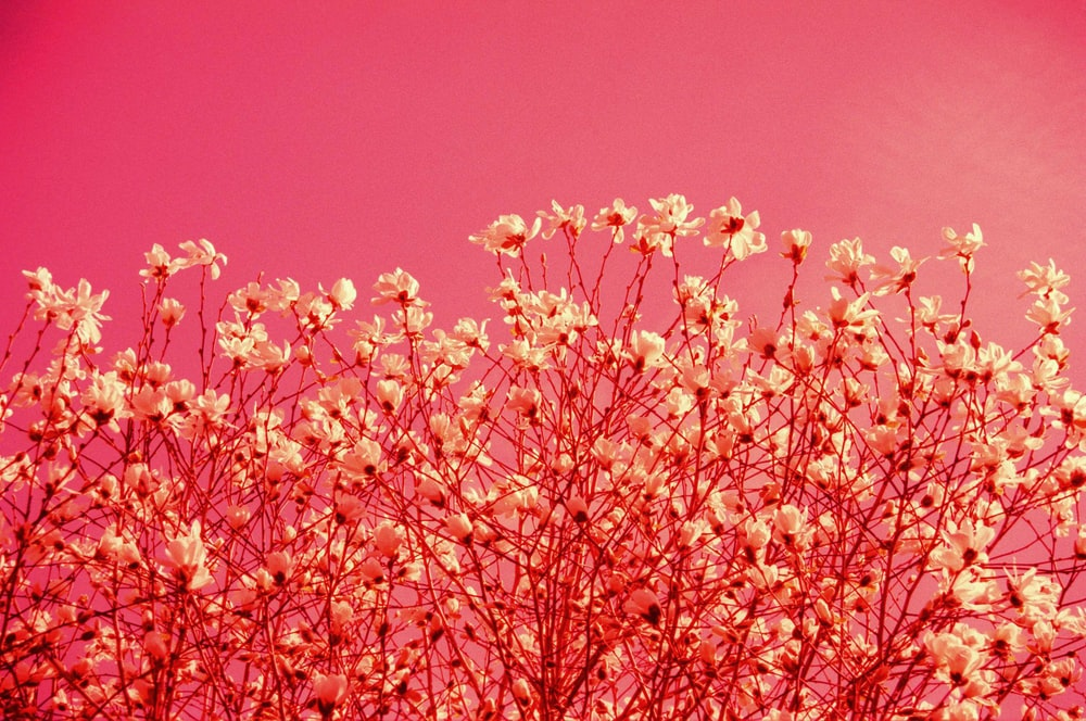 orange flowers under blue sky during daytime