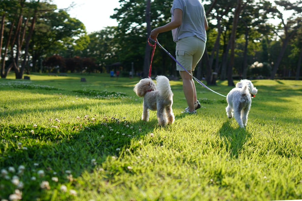 man in white t-shirt and brown pants playing with white dog on green grass field