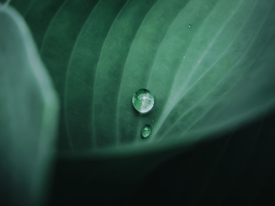 ..a drop of water, like a precious pearl💎🌿...