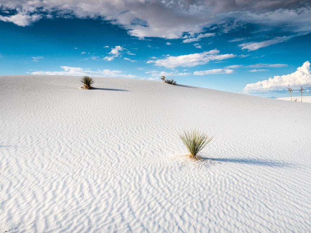 green plant on white sand under blue sky during daytime