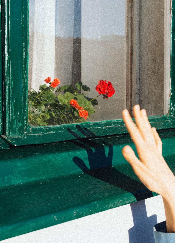 red flowers on green wooden window