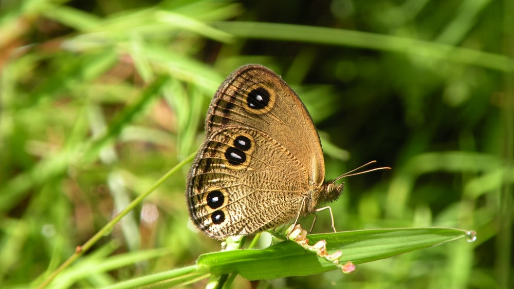 brown and black butterfly on green grass during daytime