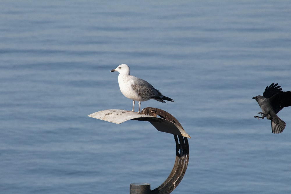 white and gray bird on brown wooden stand