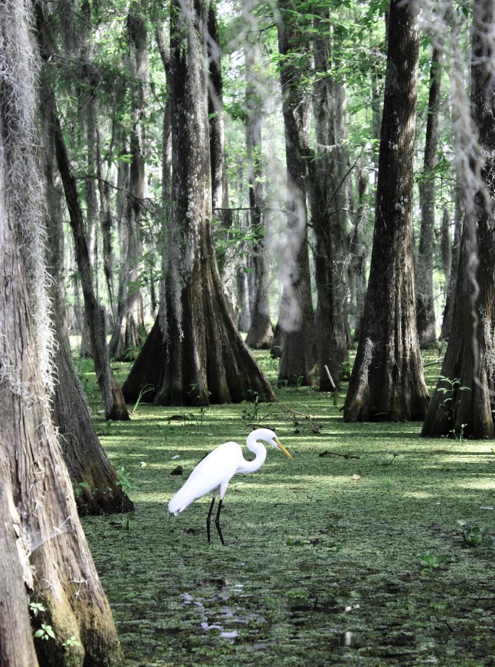 white long beak bird on green grass field near brown tree during daytime