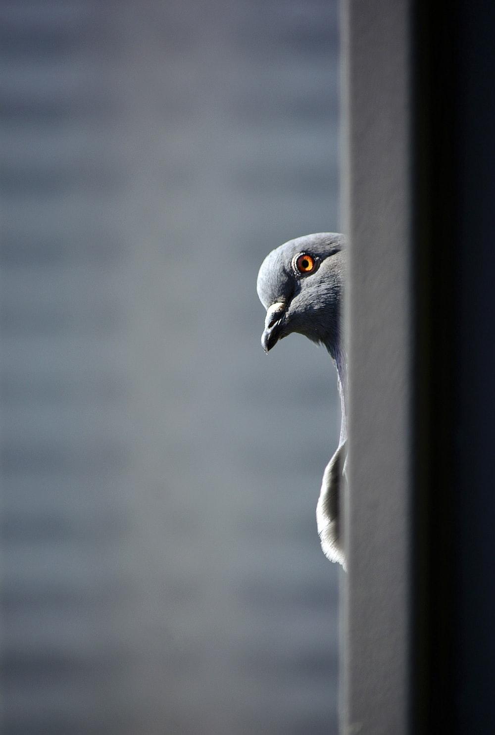 gray and white bird on gray metal bar