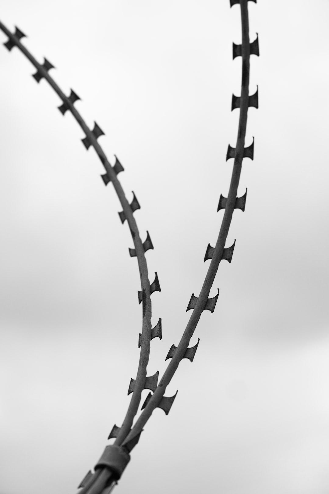 sharp barbed wire