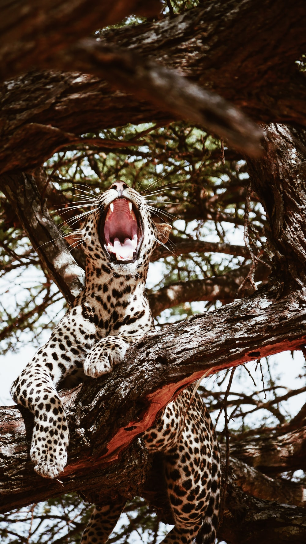 leopard on brown tree branch