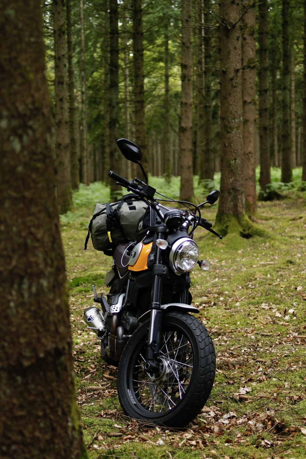 black and silver cruiser motorcycle parked beside brown tree trunk during daytime