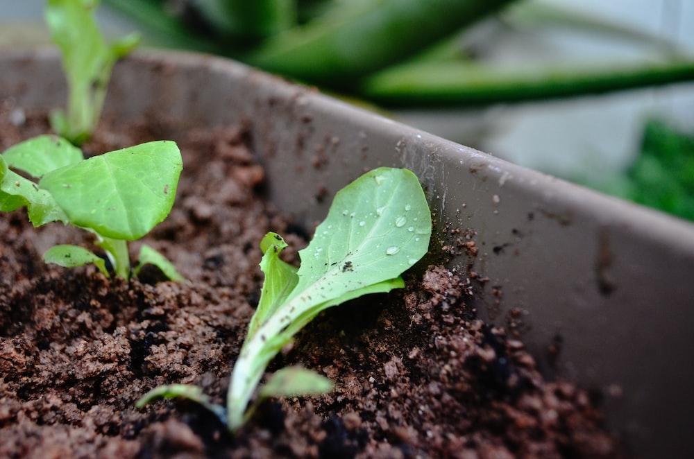 green leaf plant on gray concrete pot
