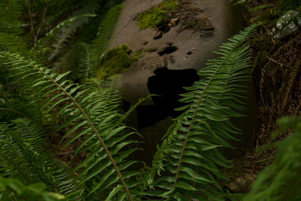green fern plant near gray concrete wall