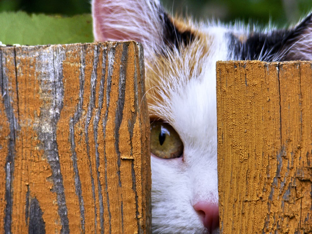 white and brown cat on brown wooden fence