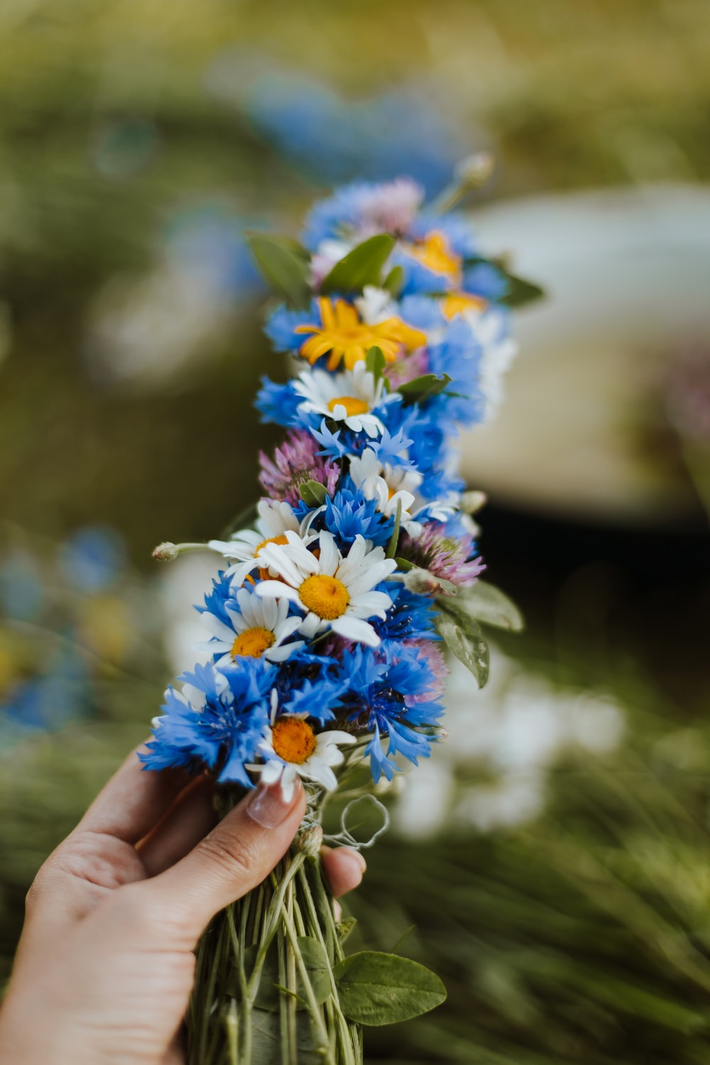 blue and white flowers in persons hand