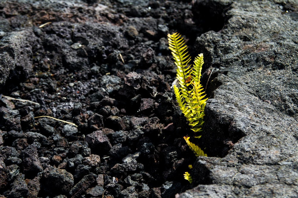 yellow and black caterpillar on brown rocky ground