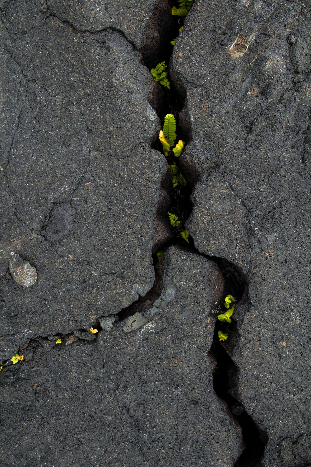 black and yellow snake on gray concrete pavement