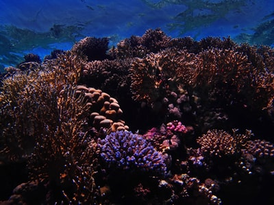 brown coral reef under blue sky reef teams background