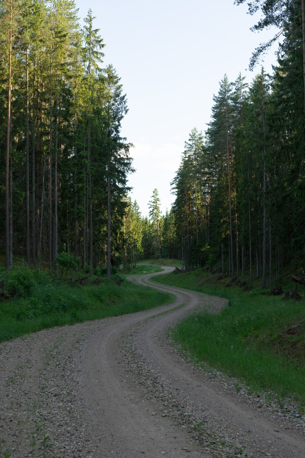 gray concrete road between green trees during daytime