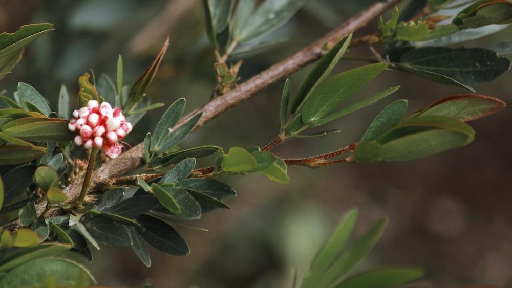 red and white flower bud in tilt shift lens