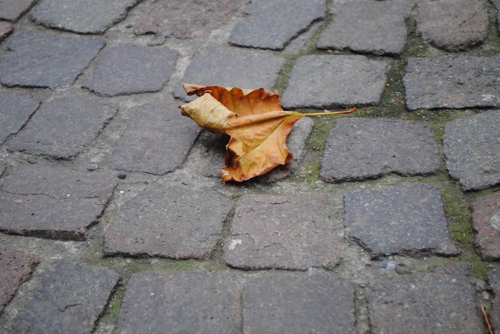 brown dried leaf on gray brick floor