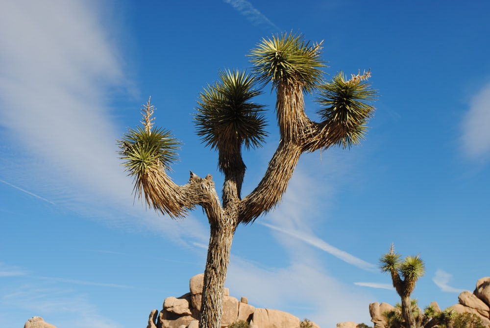 green palm tree on brown rock formation under blue sky during daytime