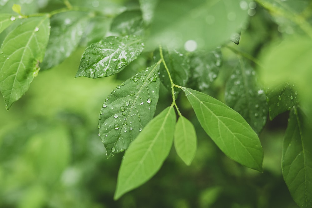 green leaf plant with water droplets