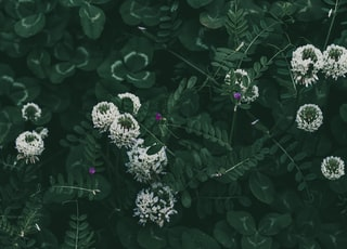 white and purple flowers with green leaves