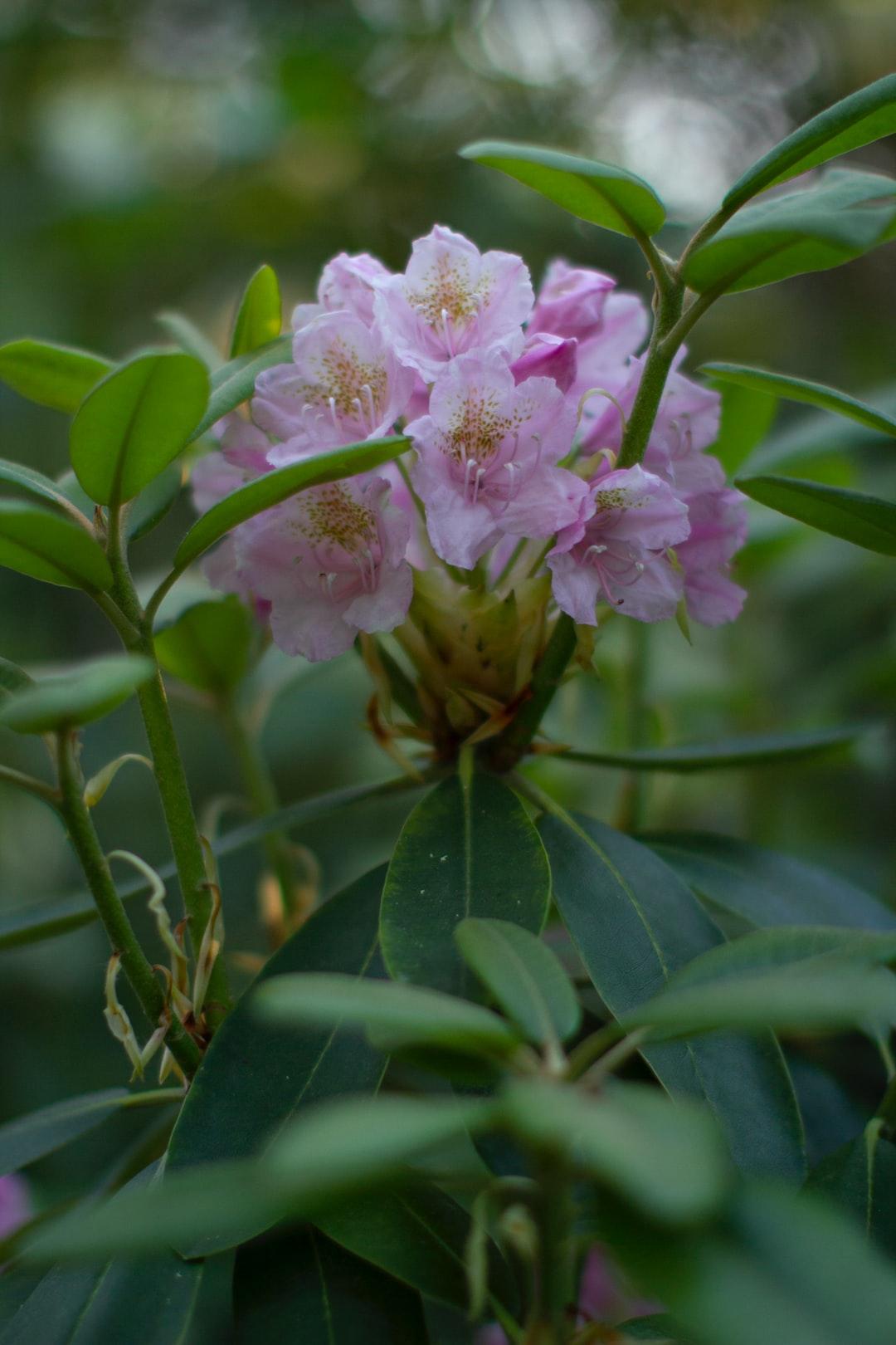 Alppiruusupuisto Rhododendron Park in Helsinki