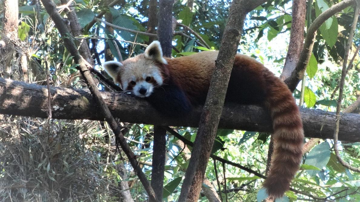 Padmaja Naidu Zoological Park Darjeeling