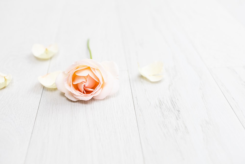 white and pink rose on white wooden table