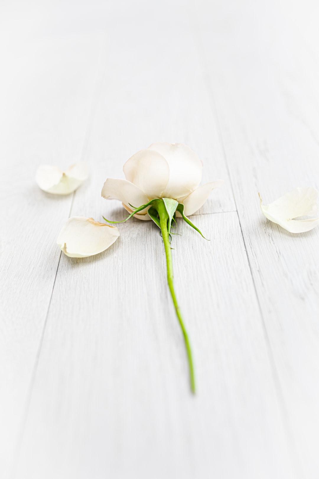 A rose lying on wood.