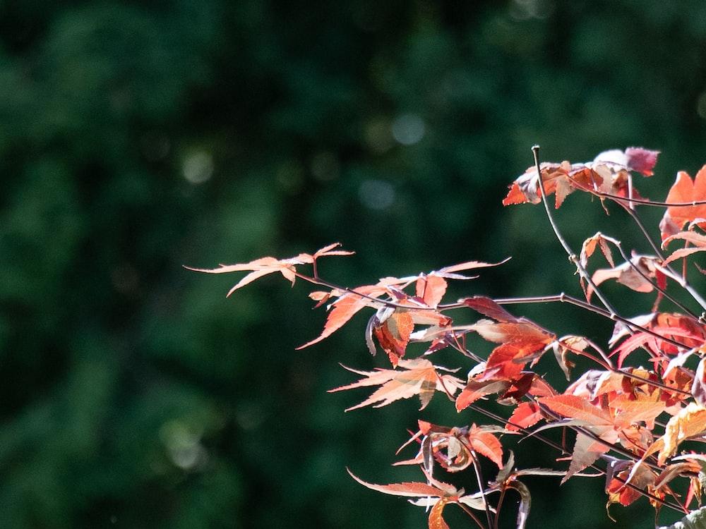 red leaves on brown stem