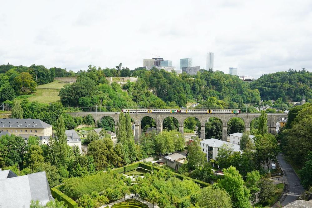 green trees and white bridge during daytime