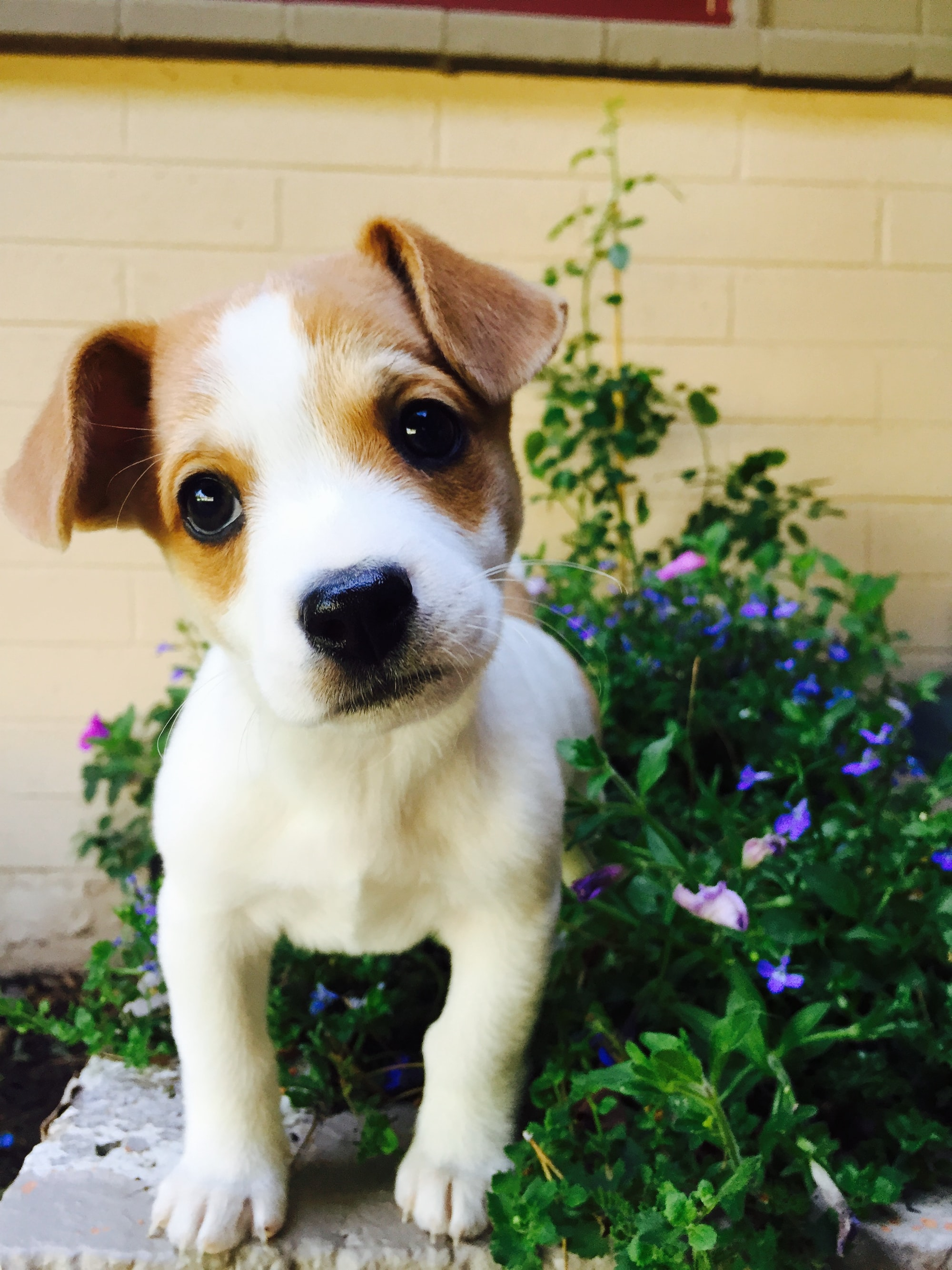 puppy, puppy named, unisex dog names