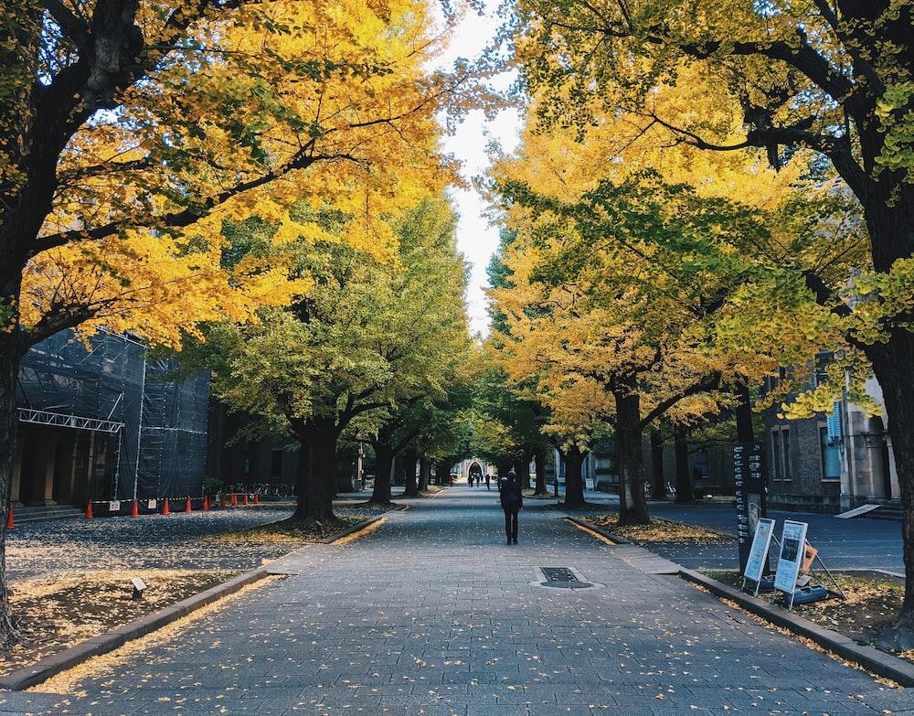 people walking on sidewalk near trees during daytime
