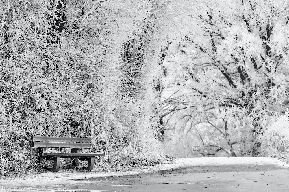 grayscale photo of bench on road