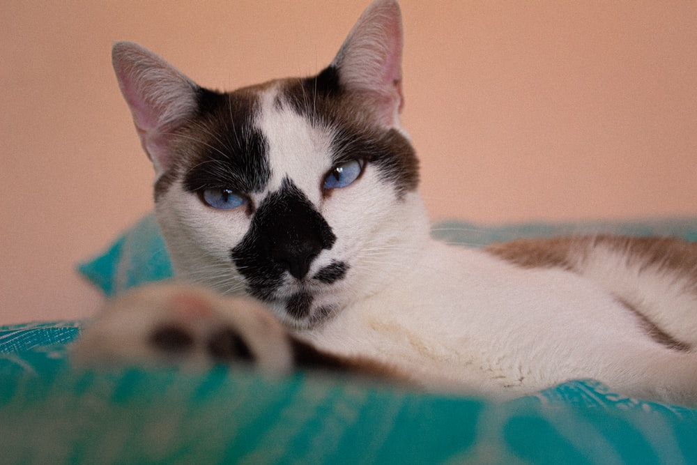 white and black cat on blue and pink textile