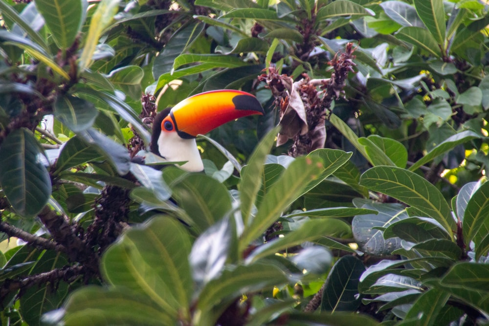black yellow and red bird on tree branch